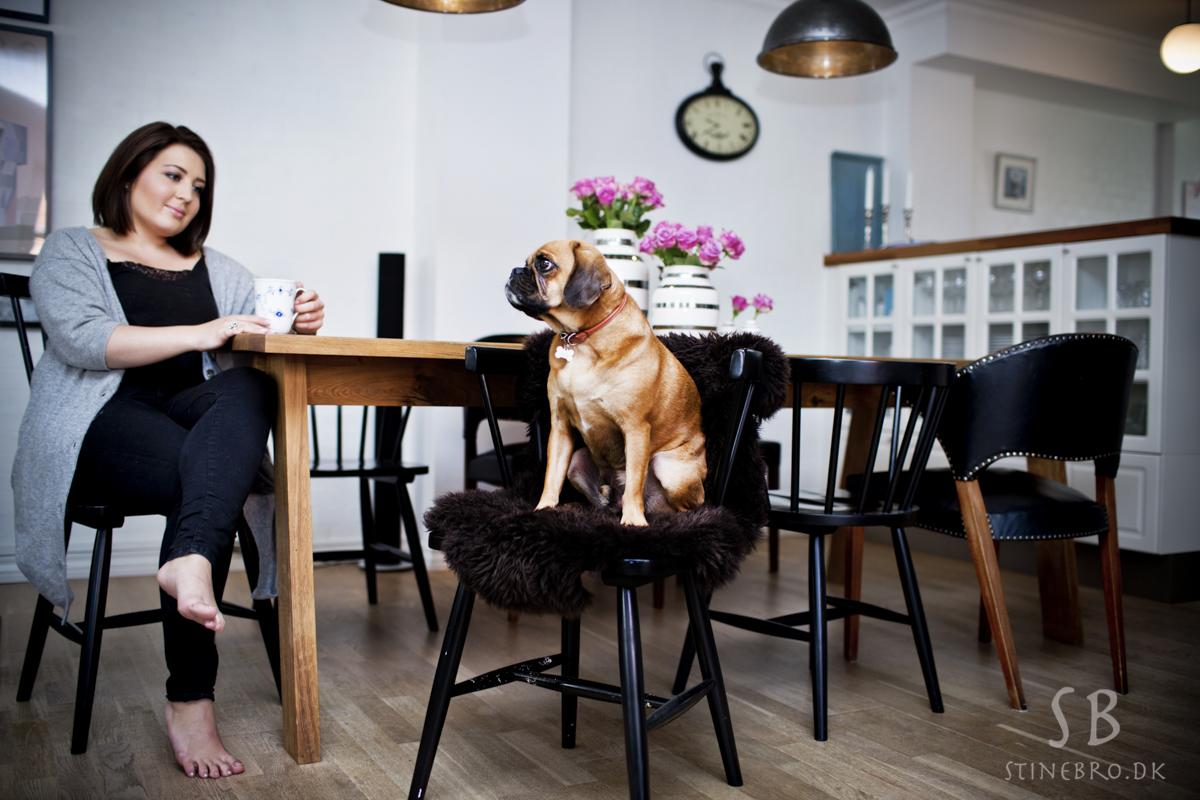 fotograf-aalborg-hund
