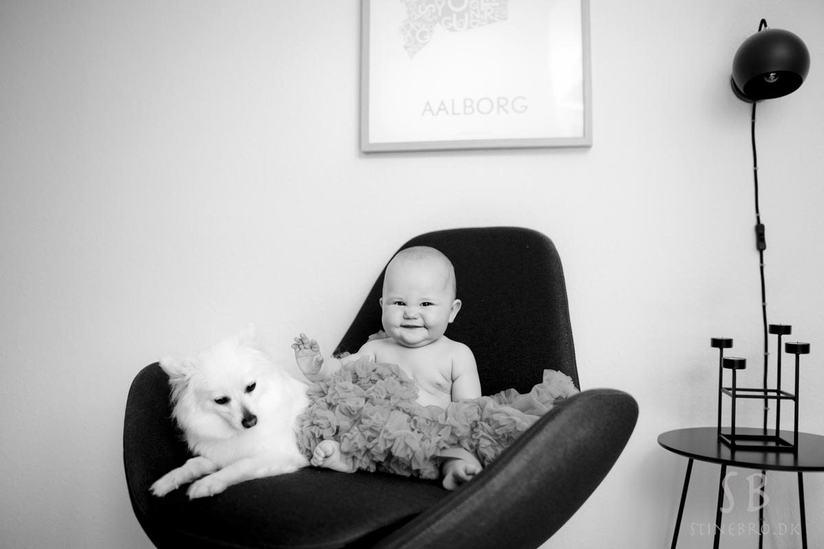 fotograf-hund
