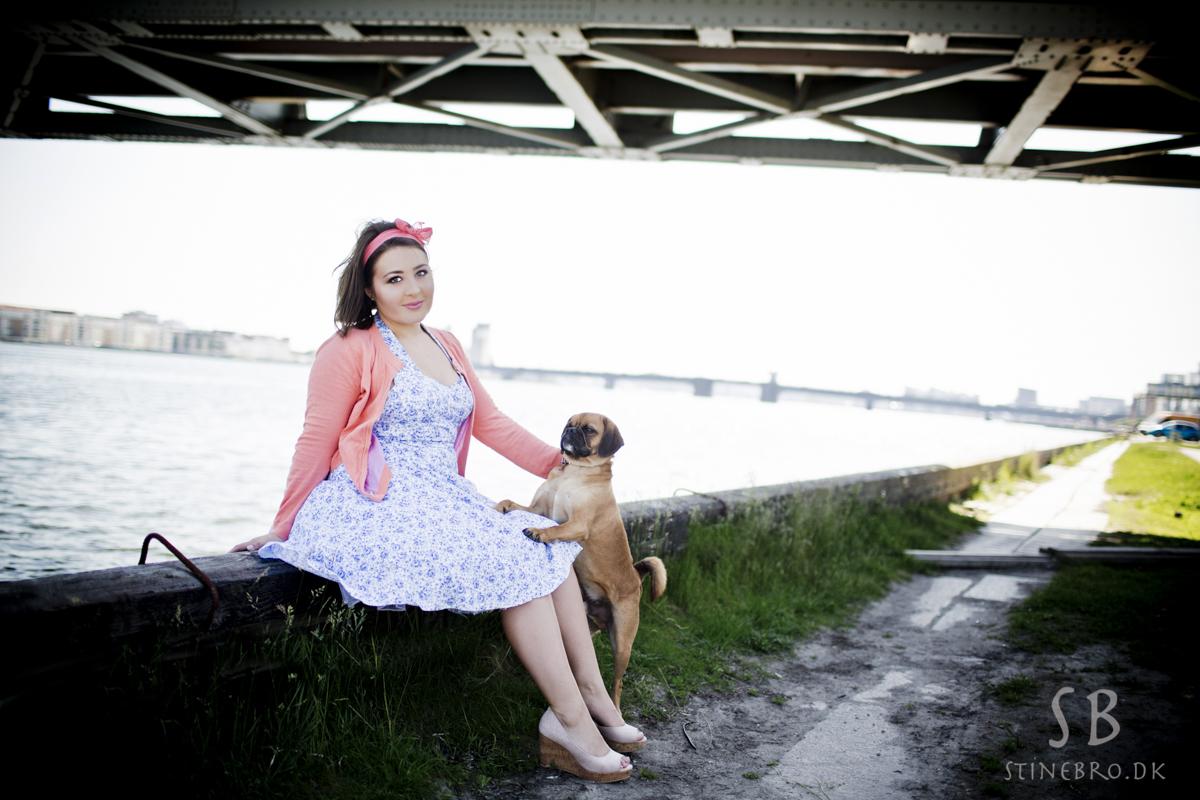 hund-portrætter