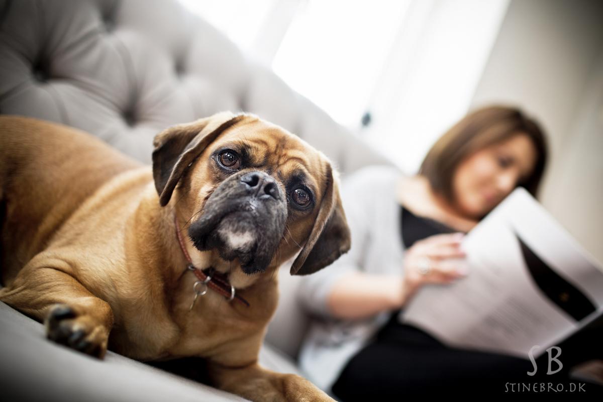 hunde-fotograf