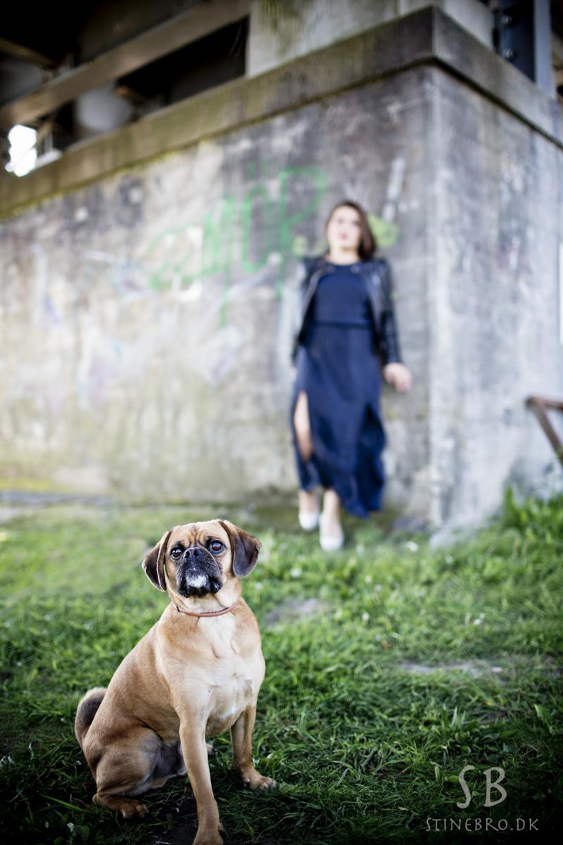 billeder-hund