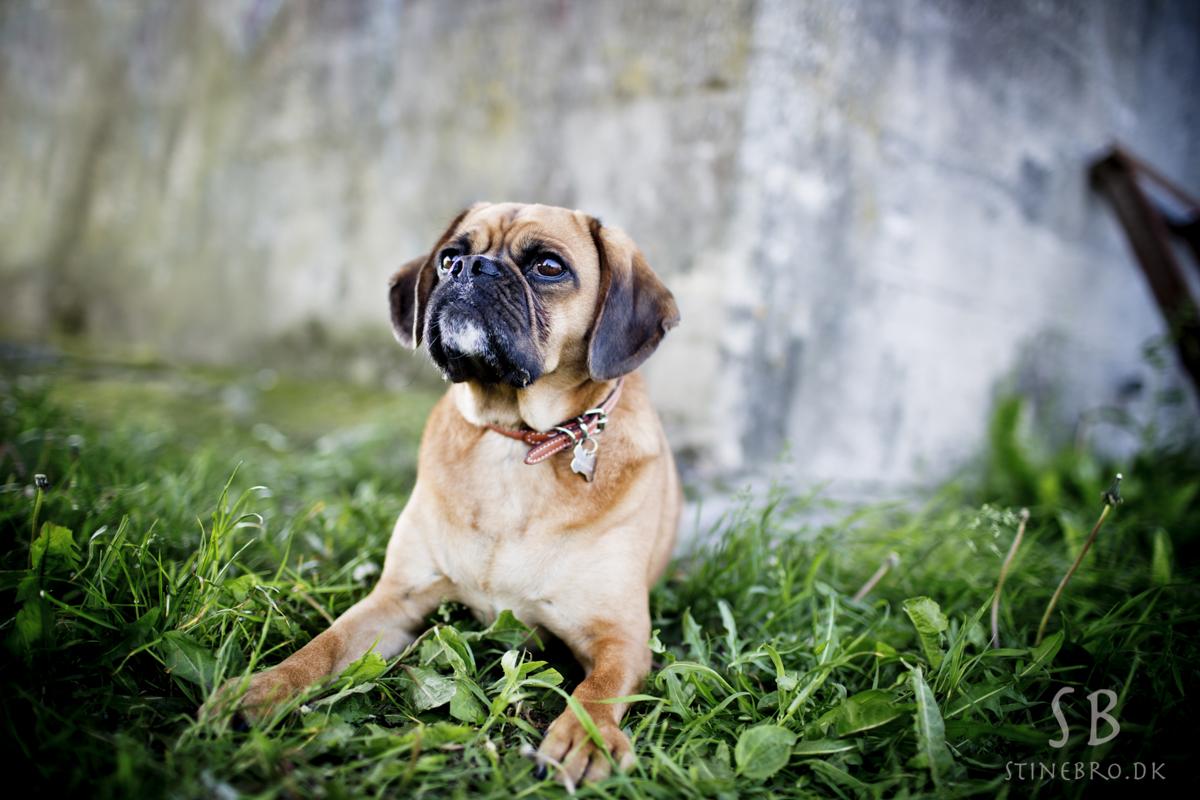 hund-fotograf-i-naturen