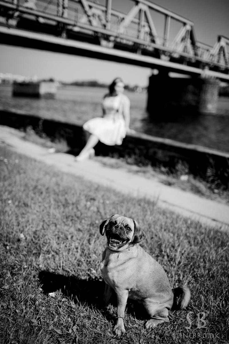 hund-i-leg-fotos